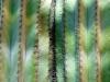 cactus-1-2