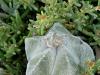 cactus-14