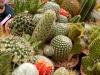 cactus-15