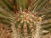 cactus-2-1