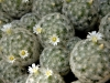 cactus-3-1