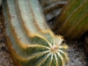 cactus-4-1