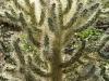 cactus-in-dbg