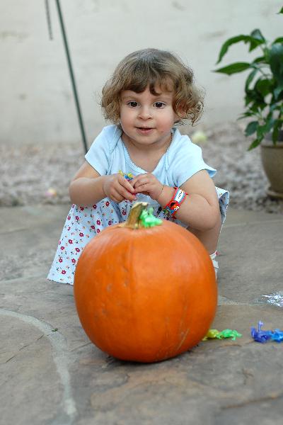 frogs-on-pumpkin-7