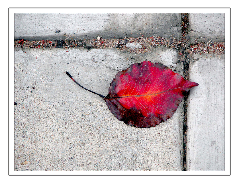 red-leaf-sharp-with-borders-for-site