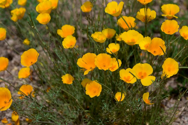 isa-wildflowers-11
