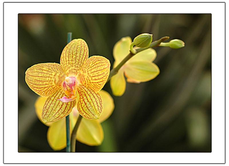 orchid-with-borders-copy