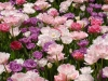 flower-bed-1