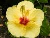 hawaii-2011-308