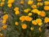 isa-wildflowers-11
