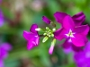 purple-flower-1-cropped