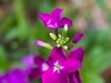 purple-flower-2