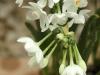 white-flowers-ed1