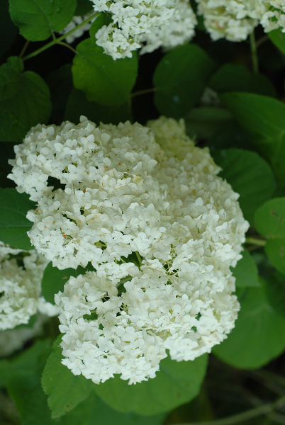 white-chicago-flowers