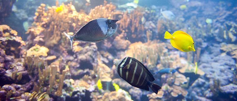 aquarium-24