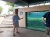 aquarium-15
