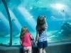 aquarium-18