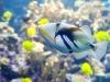 aquarium-23
