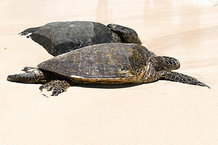 turtle-beach-10-cropped