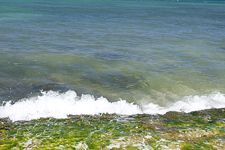 turtle-beach-3