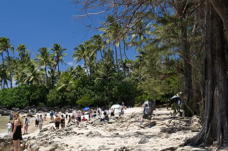 turtle-beach-4