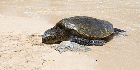 turtle-beach-6-cropped
