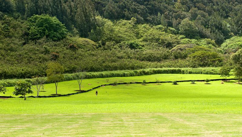 hawaii-2012-248