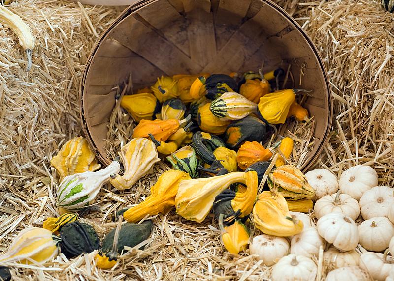 freeman pumpkin patch 14