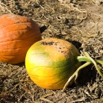 freeman pumpkin patch 20