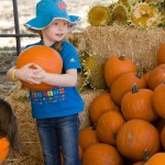 freeman pumpkin patch 38