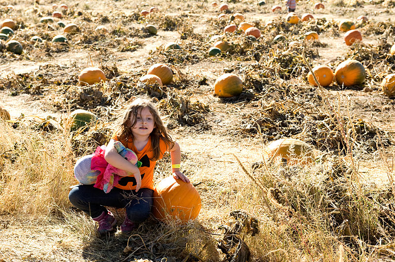 freeman pumpkin patch 4