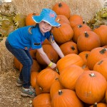 freeman pumpkin patch 40