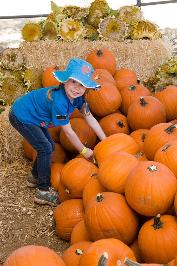 freeman pumpkin patch 40