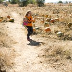 freeman pumpkin patch 55