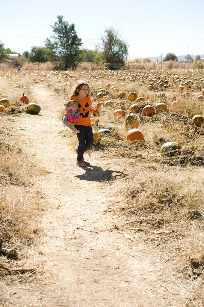 freeman pumpkin patch 55
