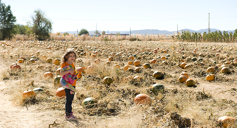 freeman pumpkin patch 57