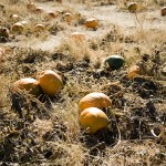 freeman pumpkin patch 64