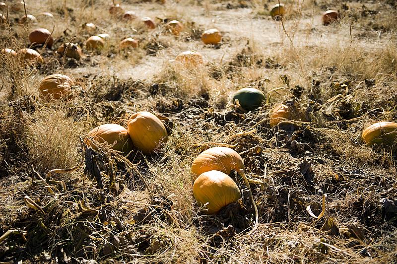 freeman pumpkin patch 64