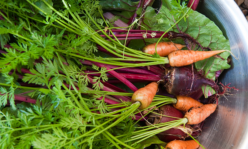 garden-veggies-1