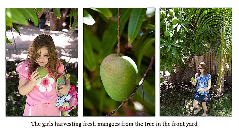 mango page 2 web